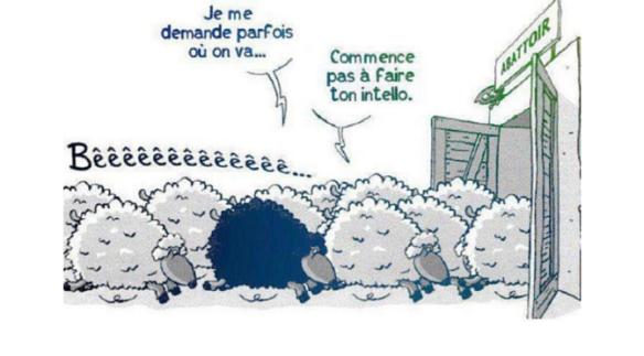 Mouton-Intello